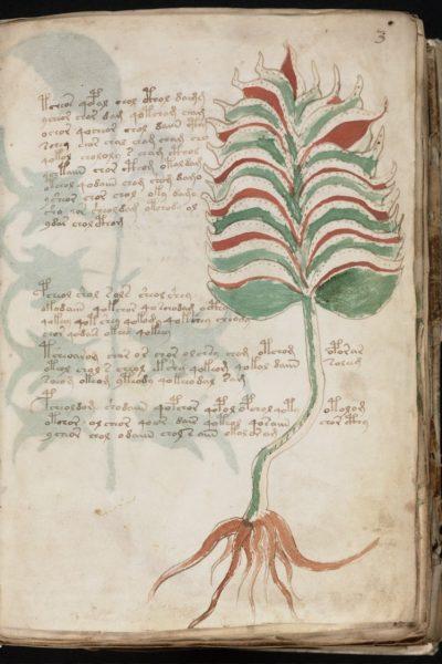 Tauchmaske Voynich Blume